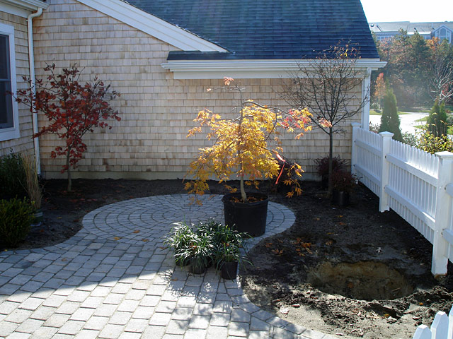 3 planting shrub phase I